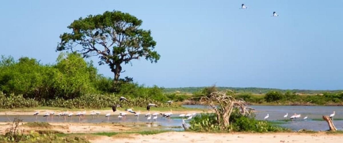 Le parc national de Bundala, un site de renom au Sri Lanka