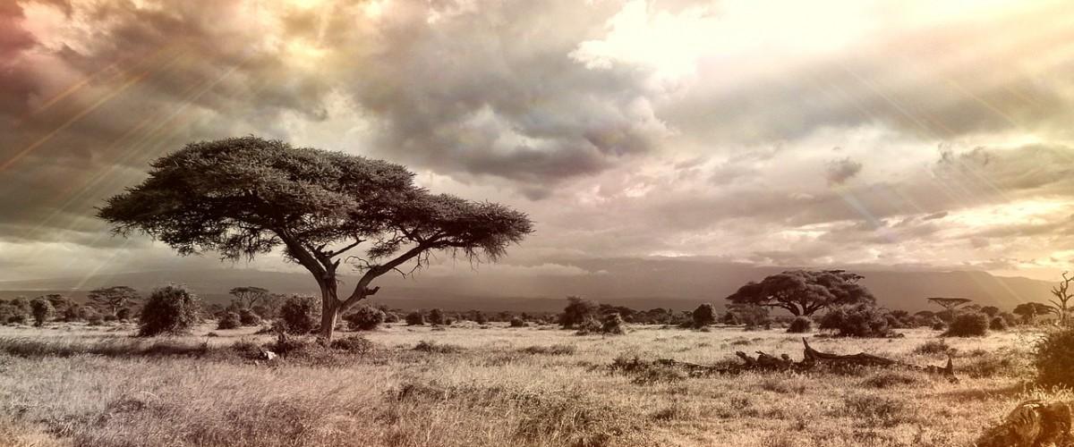 Les destinations africaines aux plus beaux voyages safari