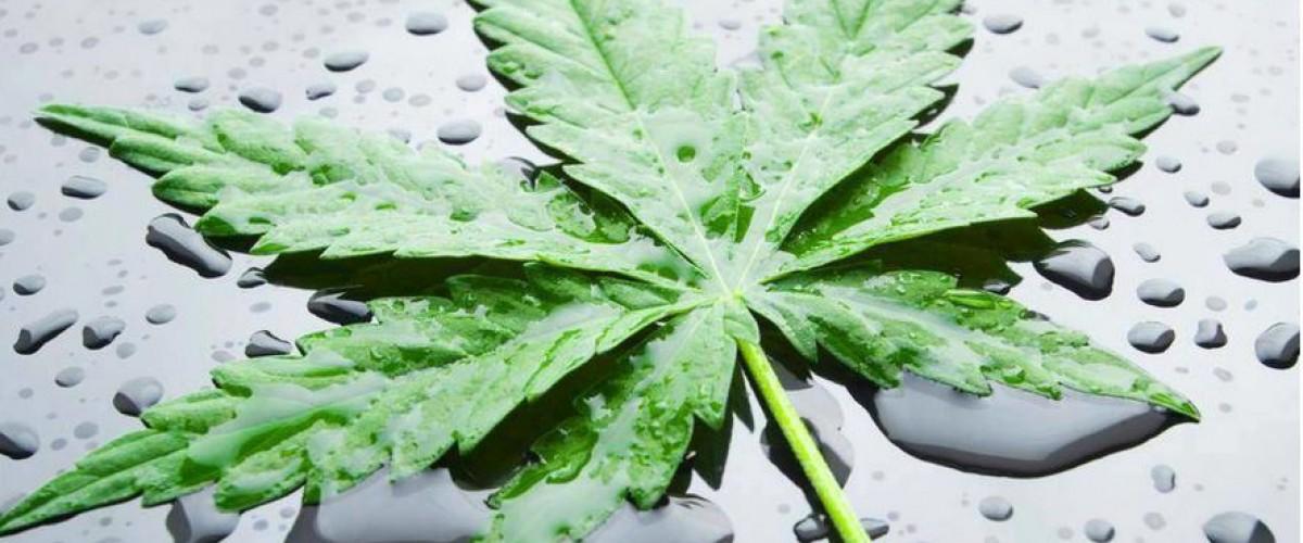 Le cannabis et ses 4 vertus dont vous n'aviez pas connaissance